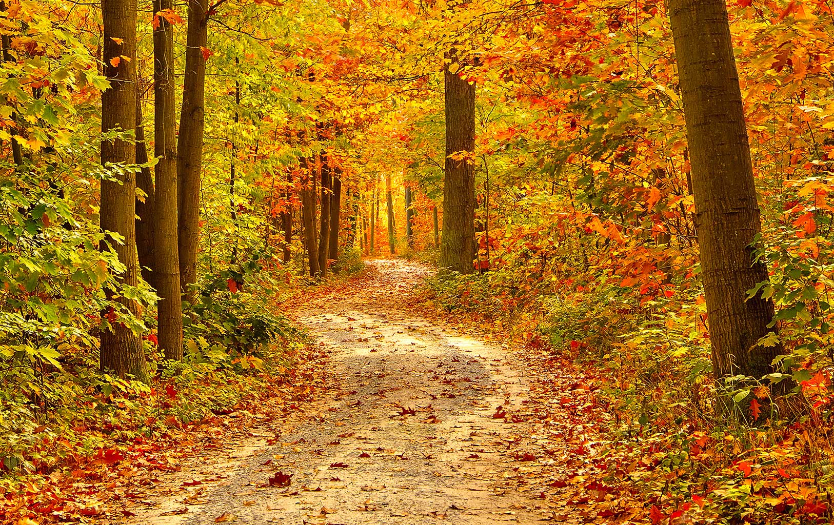Ayurvediska råd för hösten